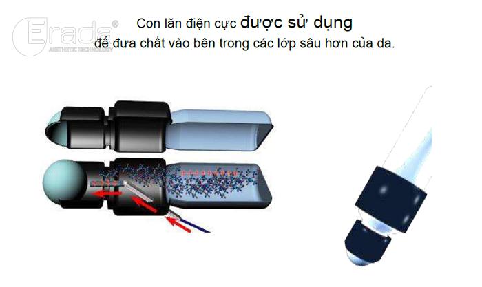 mesoderm-dan-truyen-duong-chat-1